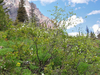 Saint Mary Falls Trail - Glacier - Montana - USA
