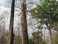 Sak Yai Forest Park