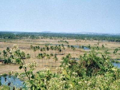 Salcete Landscape