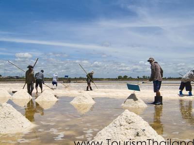 Salt Farms Samut Sakhon