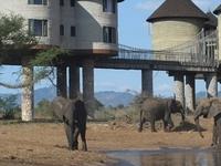 The Elephant Trail Safari