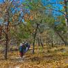 Salt Springs To Lake Delancy Trail