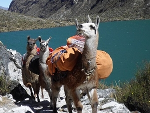 Hiking with Llamas, Santa Cruz - Vaqueria Photos