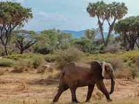 Lake Turkana Adventure Safari