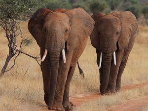 7 Days Explorer's Safari