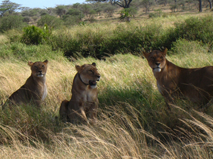 Samburu National Reserve Photos