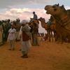 Sam Sand Dunes y paseos en camello