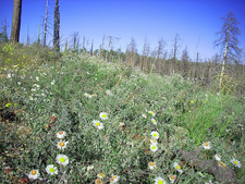 Sandy Saddle Trail 231 - Tonto National Forest - Arizona - USA