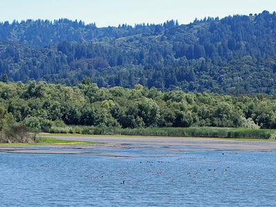San Francisquito Creek  California