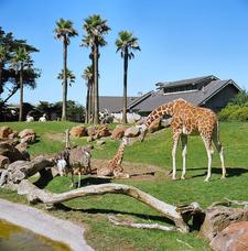 San Fransisco Zoo
