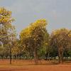 Sanjeevaiah Parque