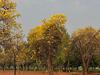 Sanjeevaiah Park