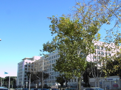 Viale Aventino And Palazzo FAO