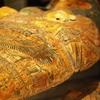 Sarcophagi In The Egyptology Collections