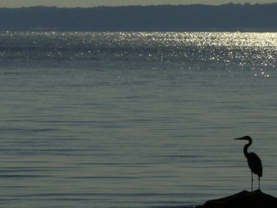 Sardis Lake