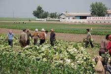 Sariwon Migok Farm - North Korea