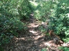 Sassafrass Trail