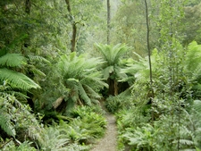 Savage River National Park