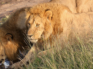 Savannah Lowlands & Big Five - 12 day safari Photos