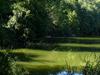 Scarlet  Oak  Pond