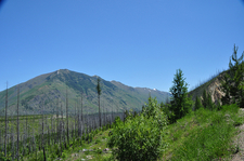 Scenic Trout Lake Trail - Glacier - Montana - USA