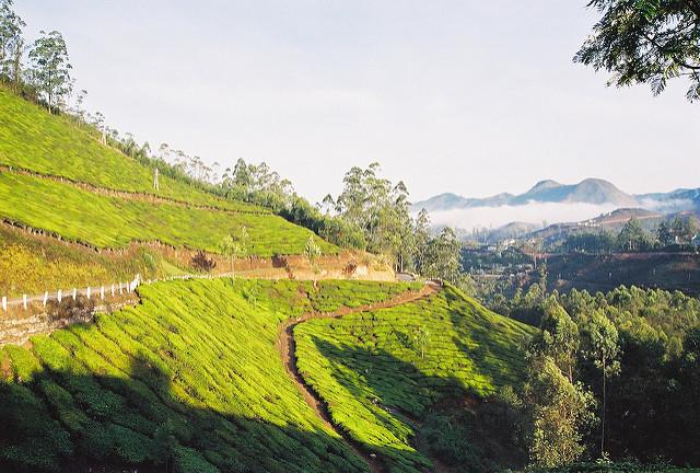 Amazing Kerala Budget Tour Photos