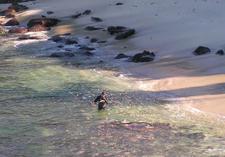 Scuba Diving At La Jolla Cove