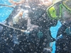 Scuba @ Poor Knights Islands Marine Reserve NZ