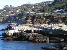 Seagulls Along La Jolla Cove