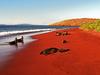 Seals On Red Sand Beach, Rabida Island