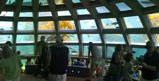 Seattle Aquarium Marine Life