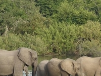 Fly In Selous Safari