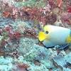 Semporna Marine Conservation