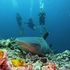Semporna Sipadan Scuba Diving