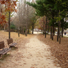 Seoul Forest Path - View