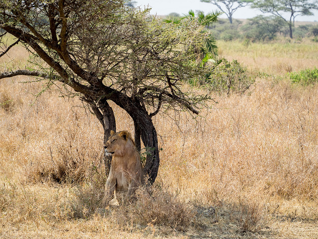 7 Days Tanzania Safari in Style Photos
