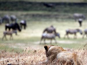 6 Days Tanzania - Camping Safaris Photos