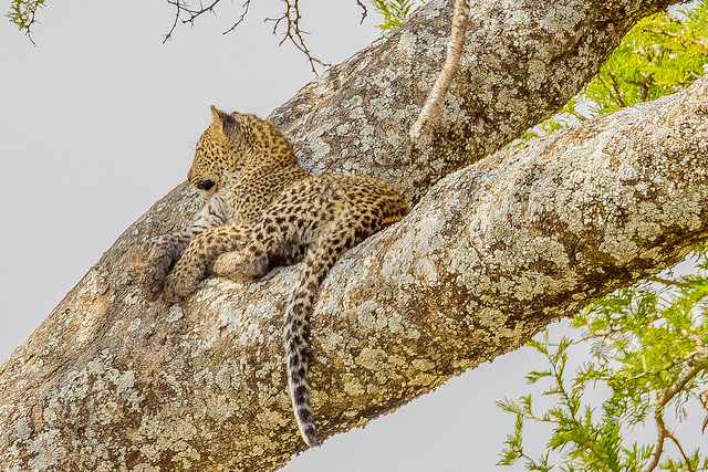 Memorable African Wildlife Tour Package Photos
