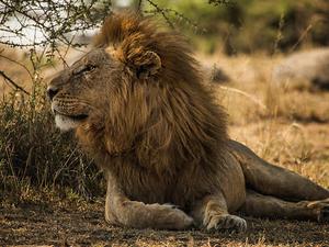 3 Days Safari Trip Photos
