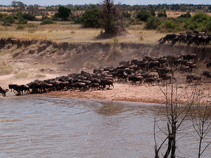 The Luxury Serengeti Great Migration Fotos