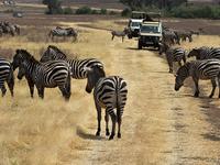 Nairobi - Lake Manyara - Serengeti - Ngorongoro Safari