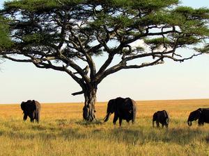 Tanzania Northern Circuit Safaris