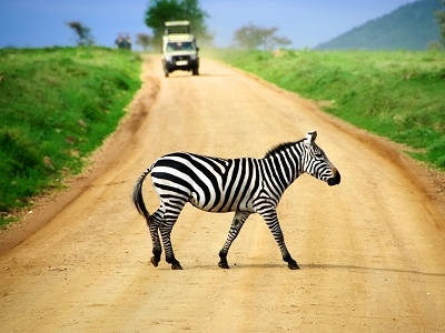 Serengeti Zebra Crossing