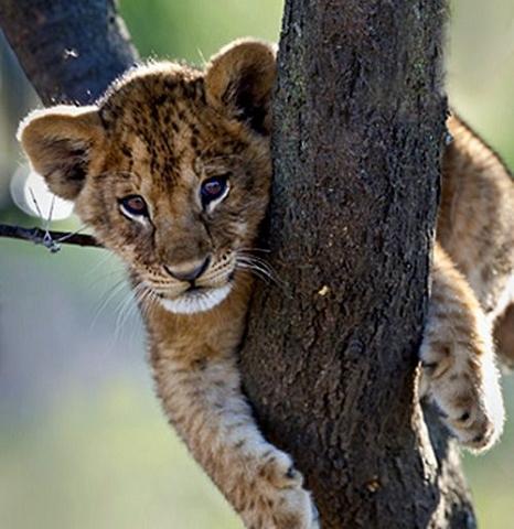4 Days Short Camping Safaris Photos