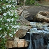 Serenity Falls - Bog Garden - Greensboro NC
