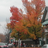 Sewickley During Autumn