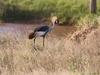 Shaba National Reserve Bird