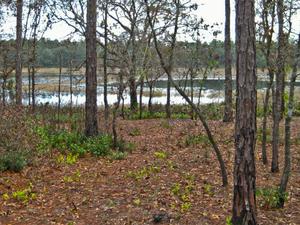Shanty Pond Campground