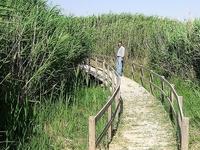 Shawmari Reserve