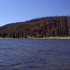 Shoshone Lake - Yellowstone - Wyoming - USA
